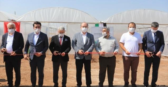 TİKA Suriye'nin kuzeyinde fide üretim merkezi açtı