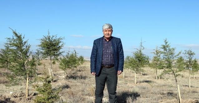 20 yılda 200 bin fidan dikti, 20 orman oluşturdu