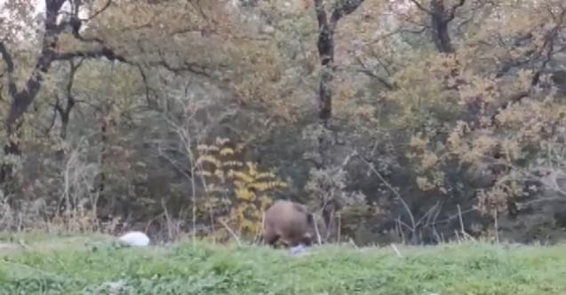 Bursa'da yabani hayvanlar şehre indi
