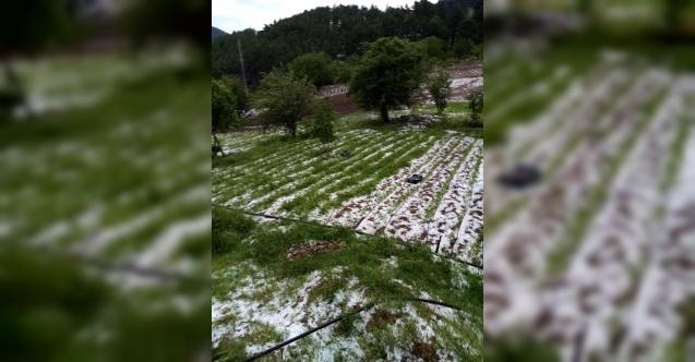 Bursa'da dolu yağışı mahsülleri vurdu